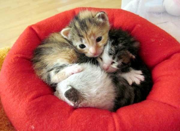 可愛いベッド子猫