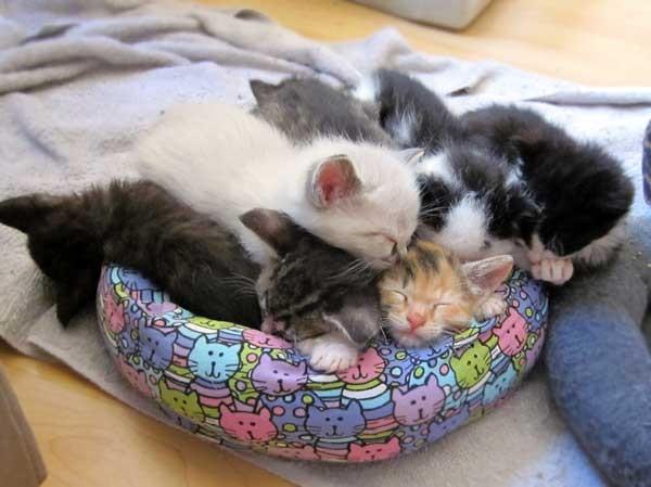 ギュウギュウの子猫達