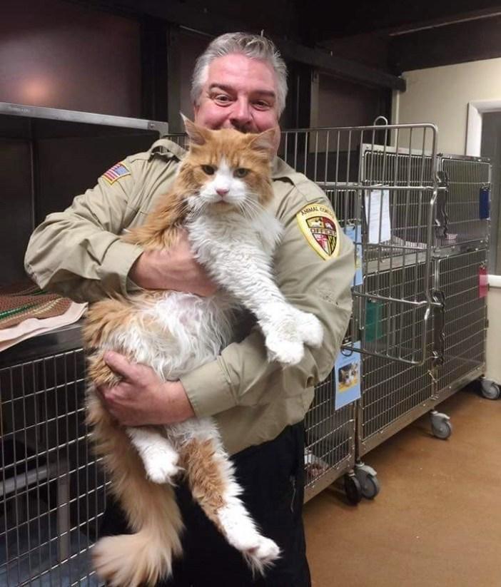 抱っこされる大きな猫