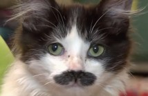 募金箱から保護された猫