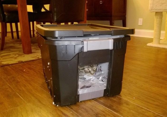 手作りの家に収まる猫