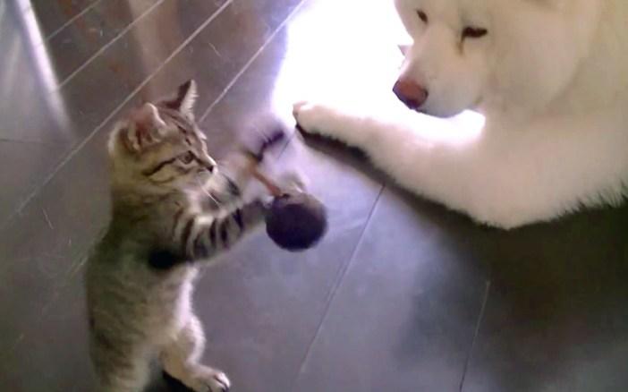 子猫を見守る大型犬