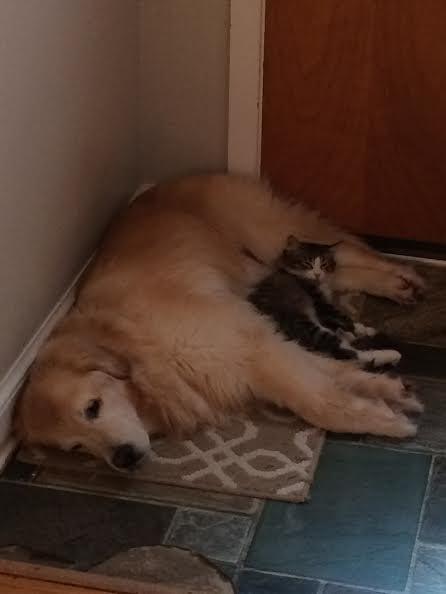いつも一緒の犬と猫