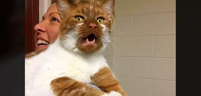 肩で鳴く猫