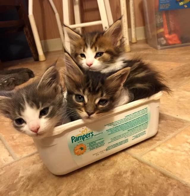 箱入り子猫達