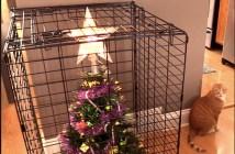 クリスマスツリーと猫