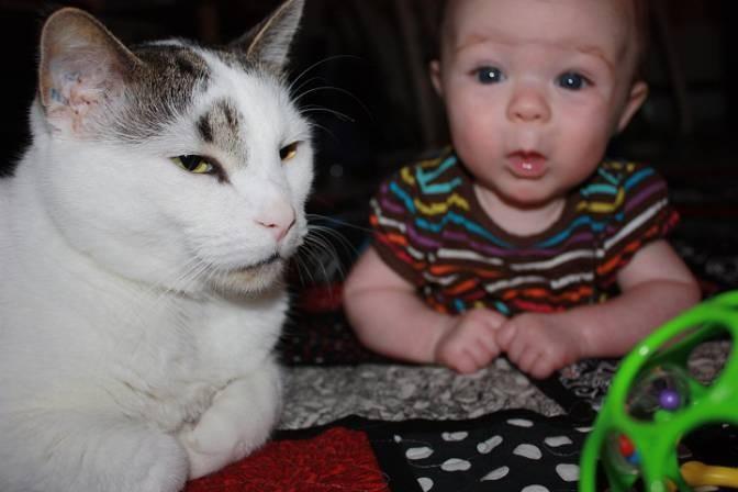 仲良しな猫と女の子