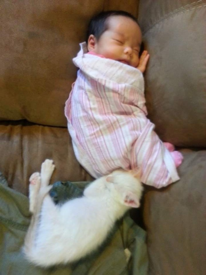 仲良しな赤ちゃんと子猫