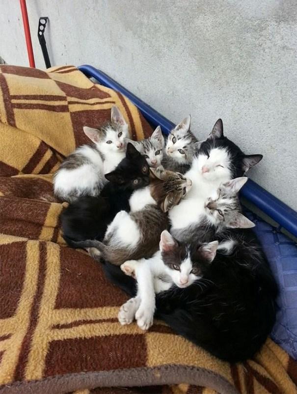 子猫に囲まれて幸せそうな母猫