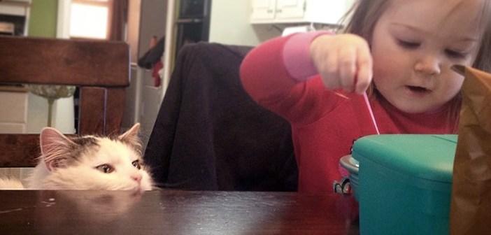 子供を見守る猫