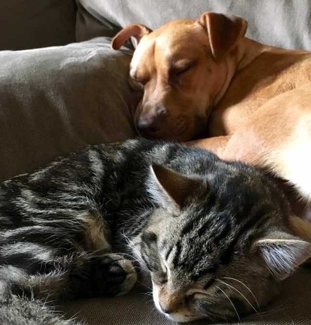 眠る犬と子猫