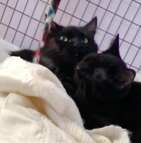 毛づくろいする黒猫