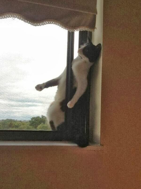 お腹が引っかかった猫