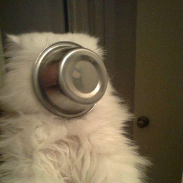 容器がくっついた猫