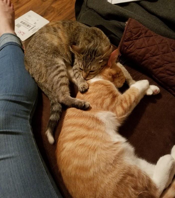 一緒に眠る猫