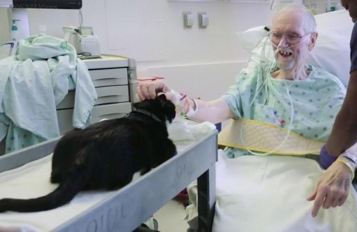 患者さんを見る猫