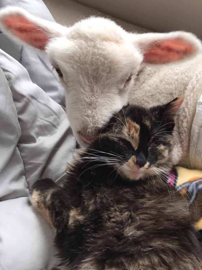 幸せそうな子羊と猫