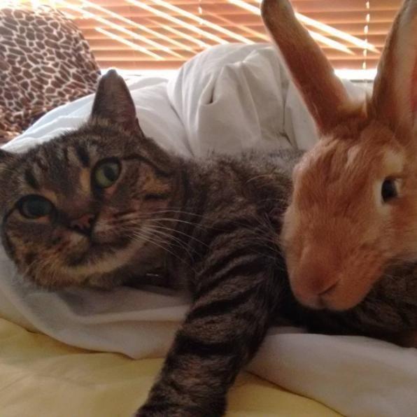 一緒に眠る猫とウサギ