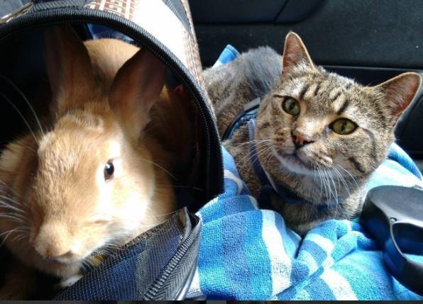 ウサギを見る猫