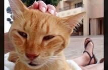 旅行先で出会った猫