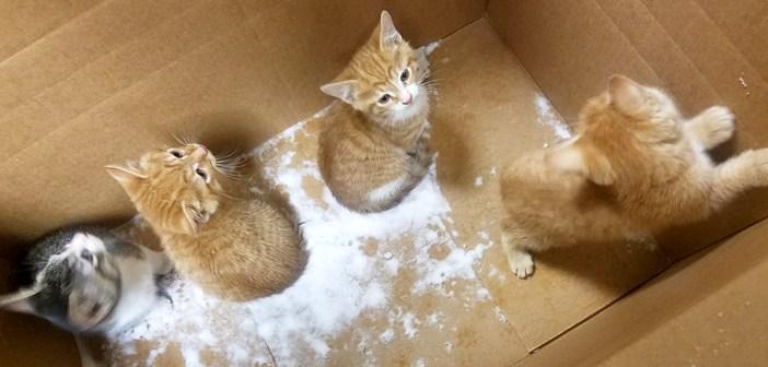 ダンボールと一緒に捨てられた子猫達