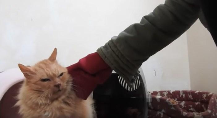触らせてくれた猫