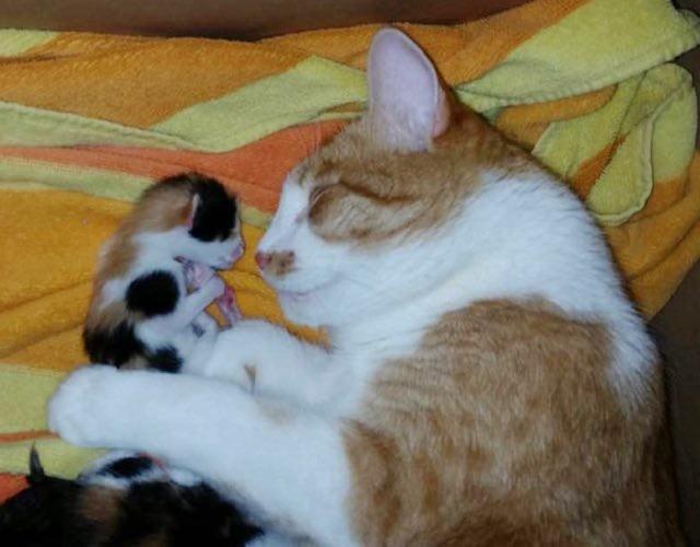 子猫と一緒の母猫
