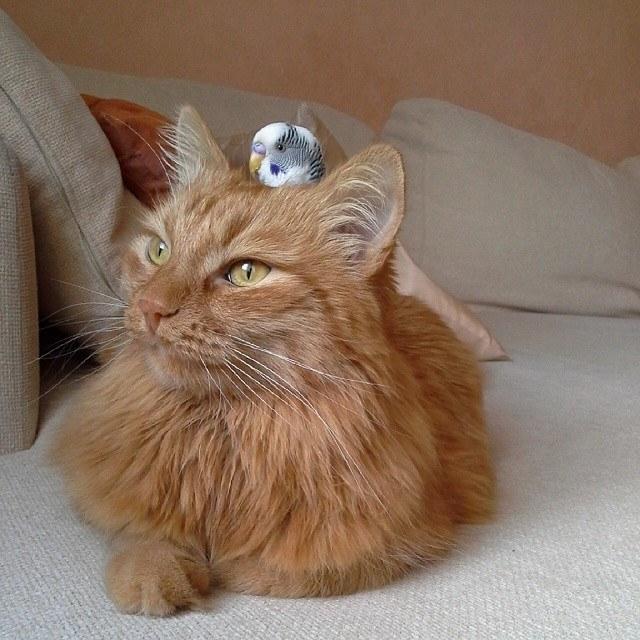 猫の頭に乗る鳥