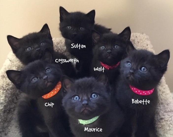 可愛い黒猫子猫達