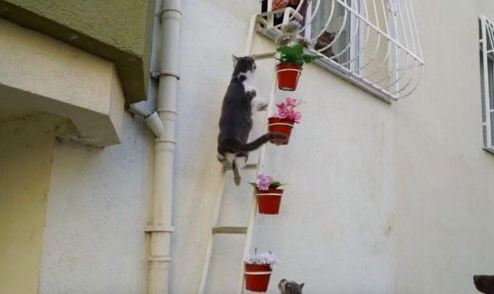 はしごを登る猫