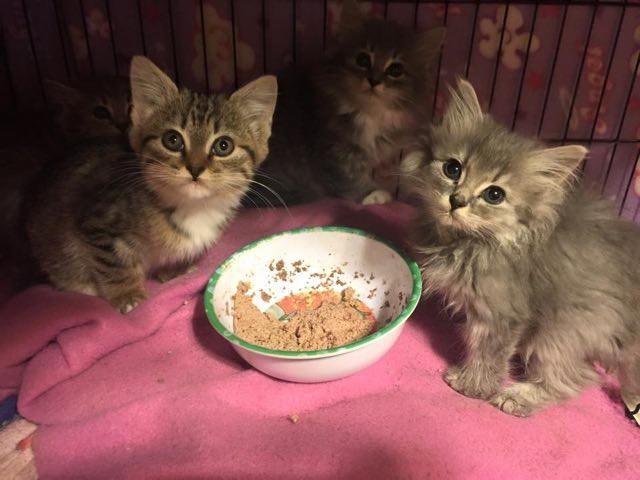 子猫のご飯の時間