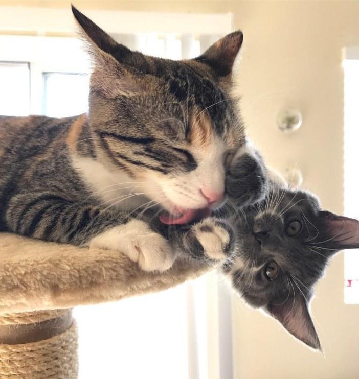 ぺろぺろする猫