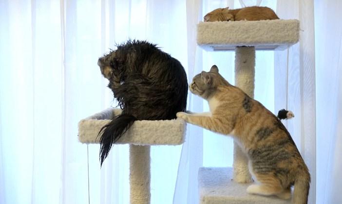 友達に気にされる猫