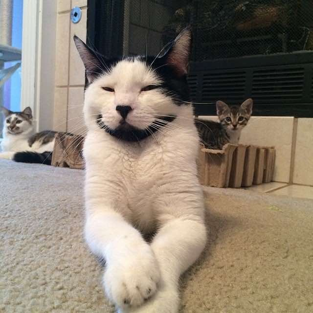 座るヒゲ猫