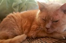 老猫と覚書