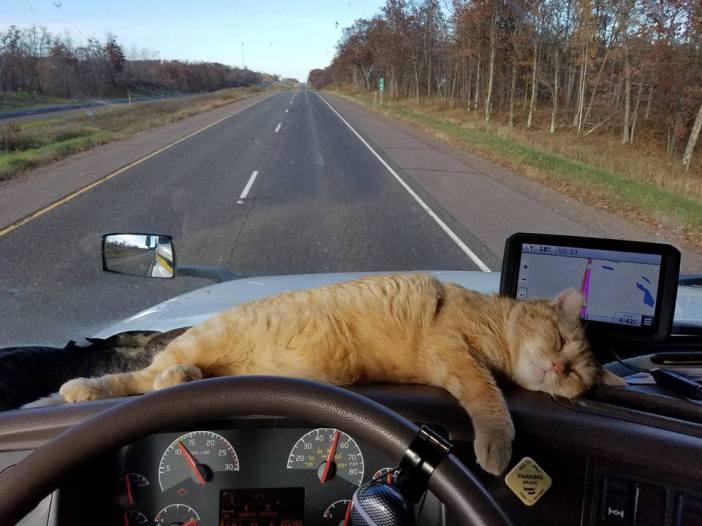 トラックに乗る猫