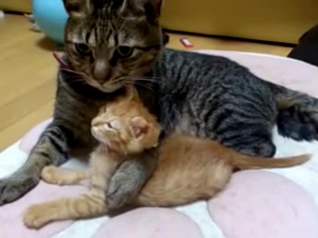 子猫と捕まえた兄猫