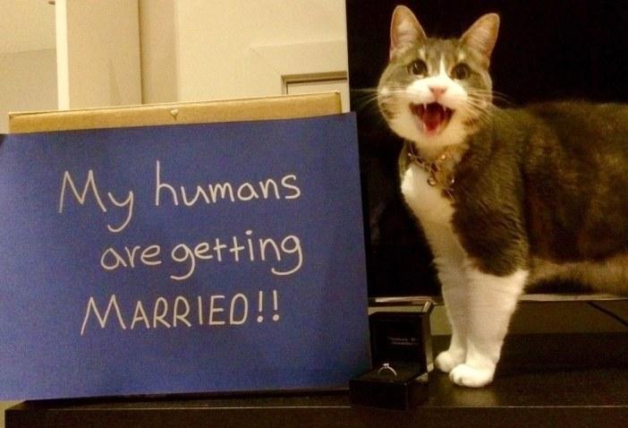 愛のキューピット猫