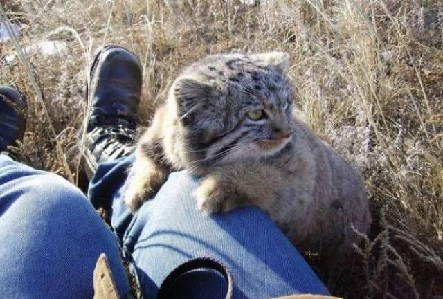 足にしがみつく猫