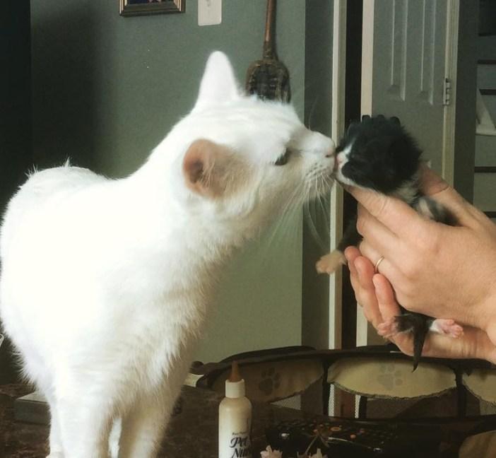 子猫にキスする猫