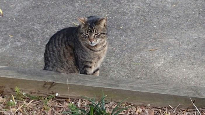 見つかった猫