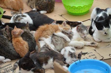 野良猫と子猫達