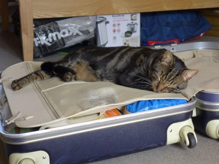 カバンで眠る猫