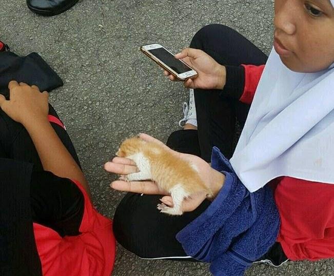 子猫を持つ人