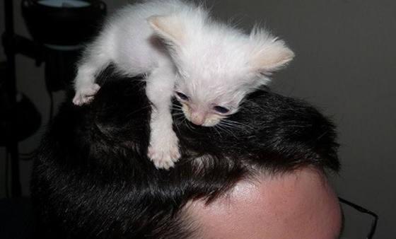 頭にくっつく子猫
