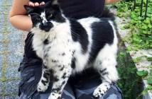 不思議な模様の猫