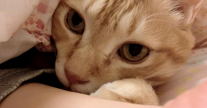布団に入ってくる猫