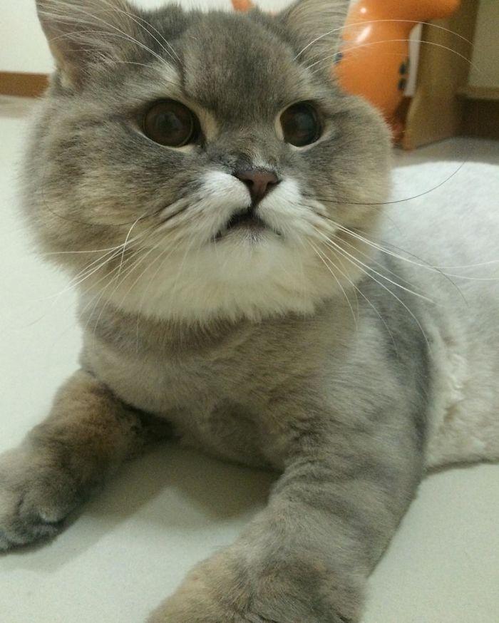 いい口の猫