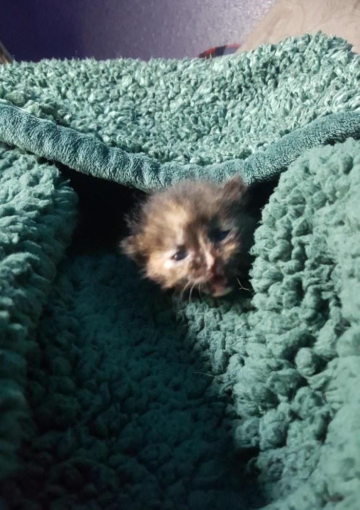 タオル子猫