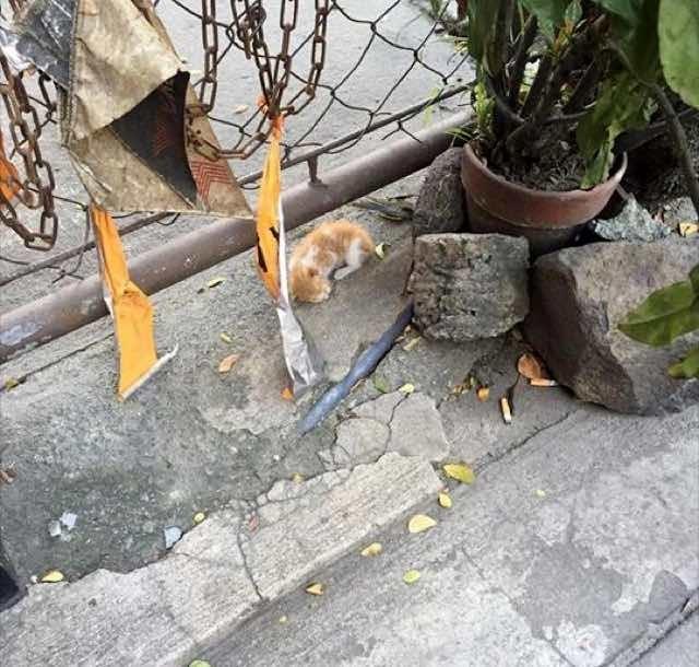 フェンスの下の子猫